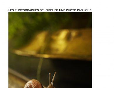 Galerie Daguerre : exposition Une photo par jour de la saison 2019 / 2020